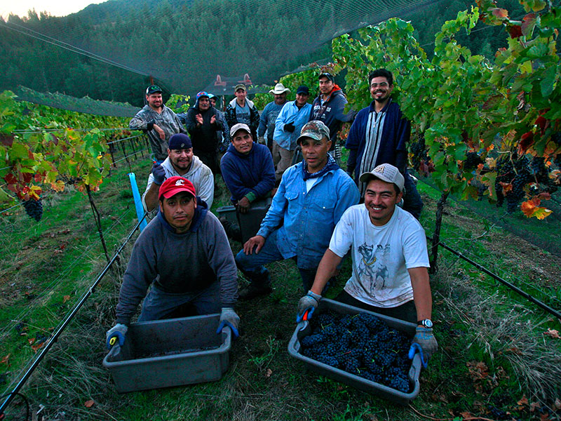 Alder Springs crew posing with harvested grapes