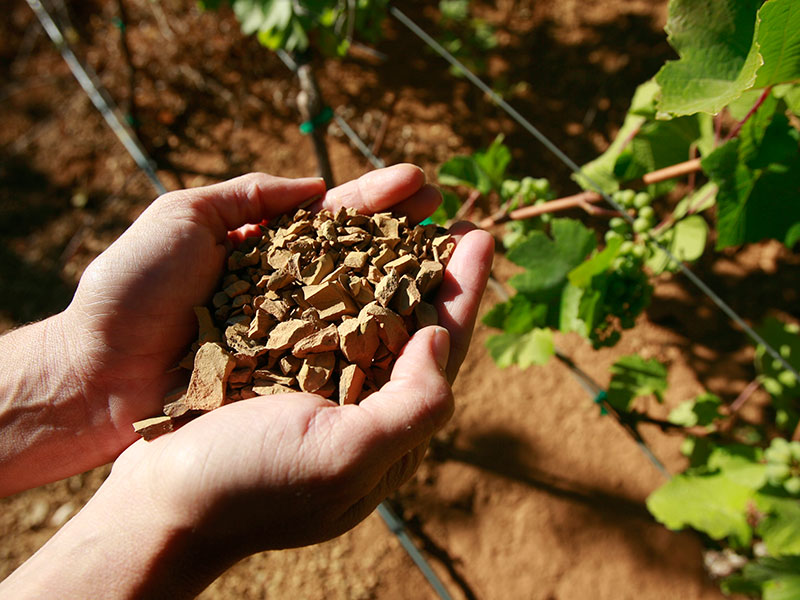 Hands holding soil among Alder Springs vinerows